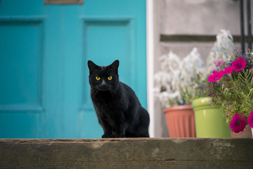 Black Cat Animal Black Color Building Exterior Cat Domestic Domestic Animals Domestic Cat Door Feline Houses And Windows Looking At Camera Mammal No People One Animal Pets Portrait Uk Whisker Yellow Eyes