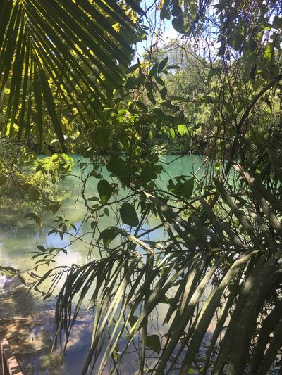 EyeEmNewHere Eye4photography  Tropical Climate Nature Growth Tree Green Color Leaf No People Beauty In Nature Outdoors Water Day Branch Sky EyeEmBestPics EyeEm Best Edits Tranquil Scene Beauty In Nature EyeEm Best Shots Eco Tourism Landscape Scenics River Green Color