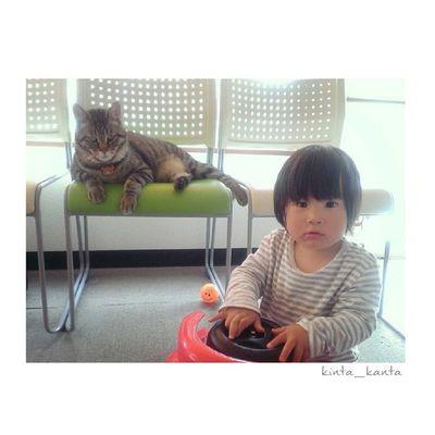 ハイ、チージュ! 二人揃ってカメラ目線♥ 兄弟 むすこ 男の子 1歳11ヶ月 1歳半息子brotherboy親ばか部おやばか 可愛い乳幼児猫にゃんこcatig_kidsig_cat
