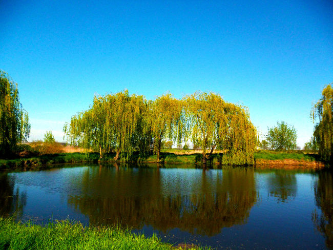 Tree Outdoors Water Reflection Blue Plant Nature Day Clear Sky No People Sky Beauty In Nature Scenics Lake Nature