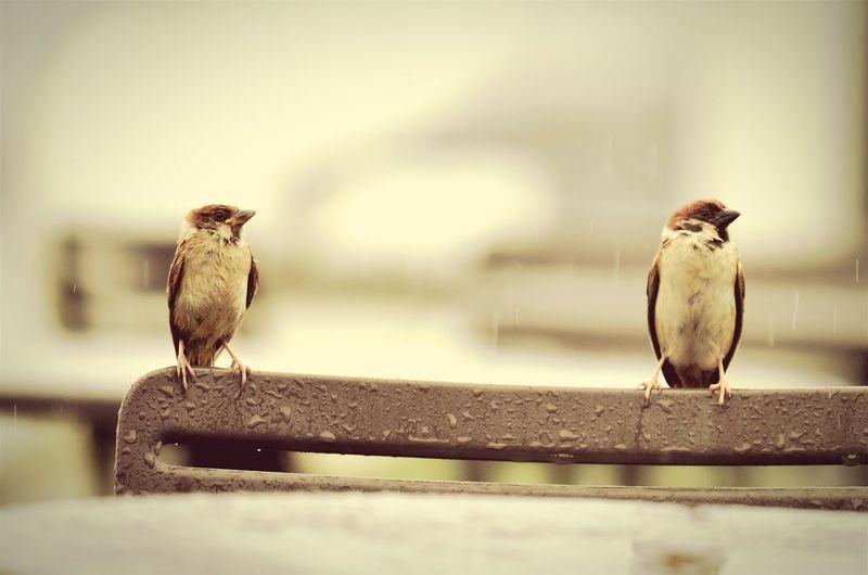 Two Love Birds