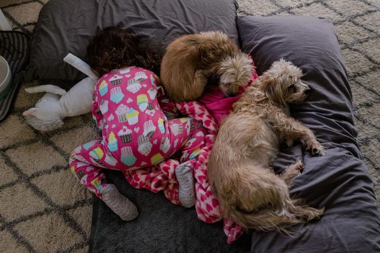 High angle view of dog sleeping on sofa