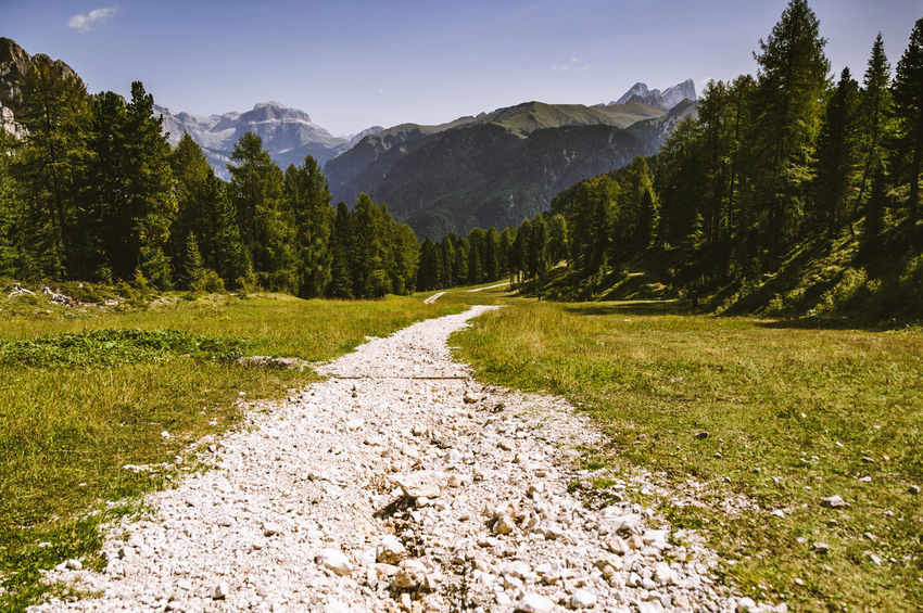 Mountain path in the woods towards the rocky peak Path Top Beauty In Nature Motivational Mountain Nature No People Success Tranquil Scene Up
