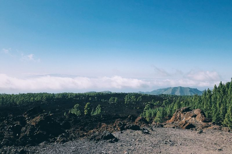 Above the clouds on Tenerife. Forest Volcanic Landscape Volcano Teide National Park Tenerife Mountain View EyeEm Selects Sky Plant Growth Beauty In Nature Scenics - Nature Tranquility Landscape Environment Nature Cloud - Sky No People Rural Scene Idyllic Tranquil Scene First Eyeem Photo