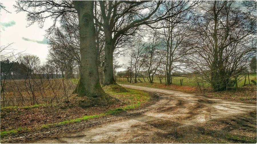 Showcase April Trees Away Way Way To Go Home Sky Field Meadow Landscape_photography Landscape Nature Photography Nature EyeEm Nature Lover Natur