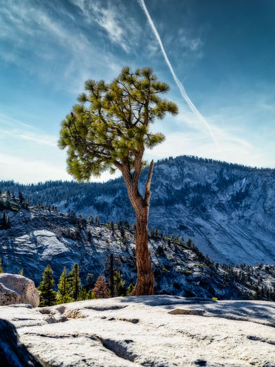 Tree on snow covered landscape against sky