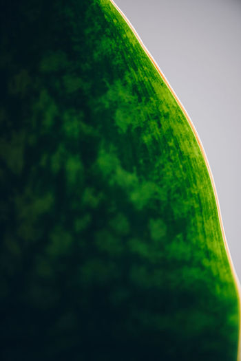 Low angle view of green plant against sky