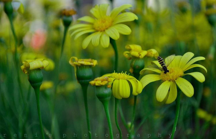 Flowers Flowers,Plants & Garden EyeEm Flower