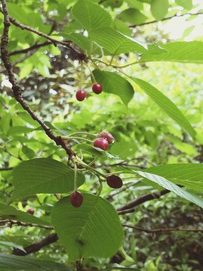 红了樱桃,绿了芭蕉☘🍒