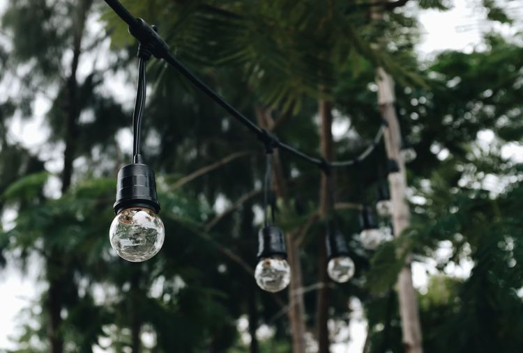 Low angle view of illuminated light bulbs hanging from tree