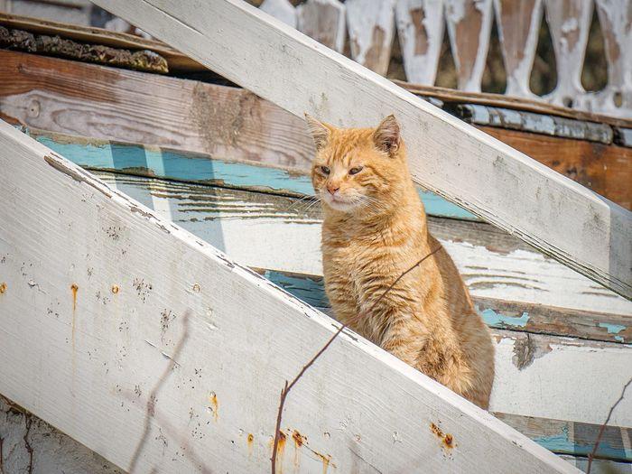Alert cat on ladder