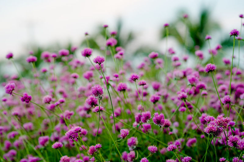 Close-up of flowering plants growing on field