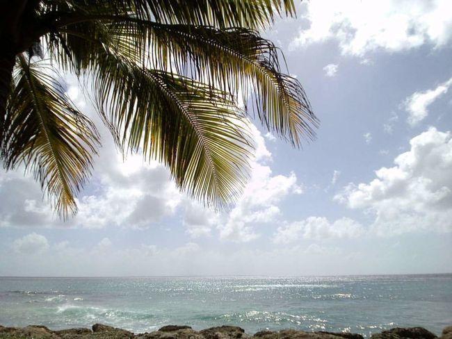 Palm Tree Nature Horizon Over Water Beauty In Nature Myview Nature Beautifulmoments EyeEm Gallery Enjoying Life Beachphotography Hello World Carribean Life Carribean Style Beautifulthings Beauty In Nature