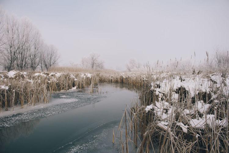 Winter snowy landscape Beautiful Nature Clouds Colors Details Frost Frozen Ice Landscape Light Macva Minimalistic Nature Outdoors Scenics Serbia Sky Snow Tree White Winter