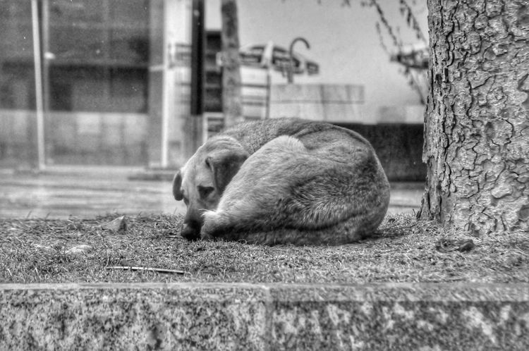 Dog Alone Time One Animal Friendship Black&white Türkiye Taraklı EyeEmNewHere