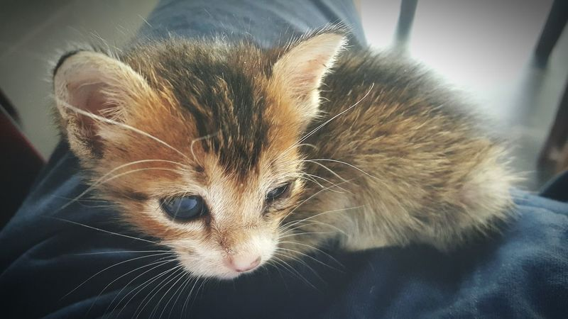 Sleepy Kitten 🐱 My Citten Is A Very Cute 🐱 😚 😚 Kittenoftheday Kittens Of Eyeem Kitten Love Kittenlovers Orphan Kitten