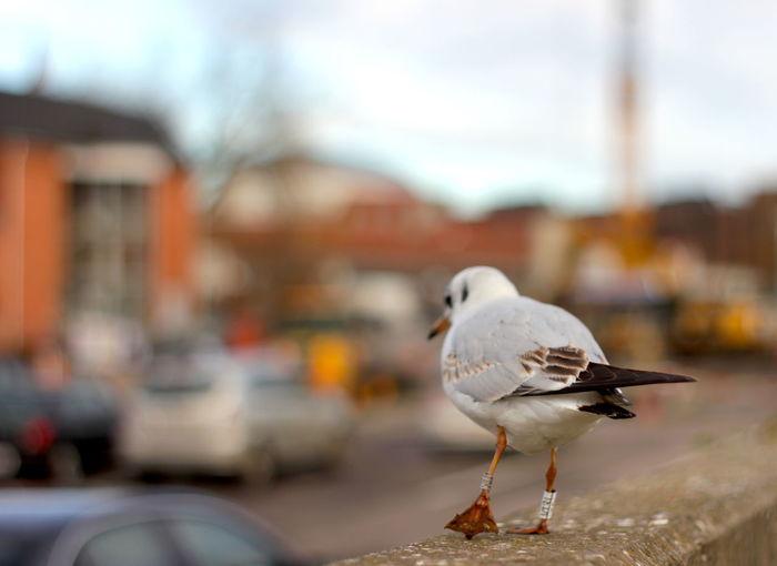 Pigeons perching on railing