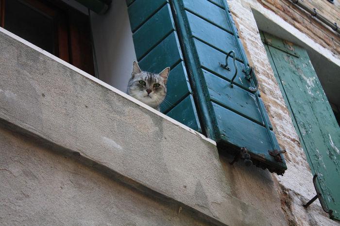 Animal Animal Themes Ausblick Cat Day Fenster Fensterblick  Haustier Katze Neugier  Neugierig No People Pets