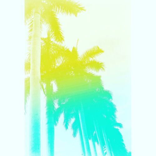 Summer Palm Trees Popart