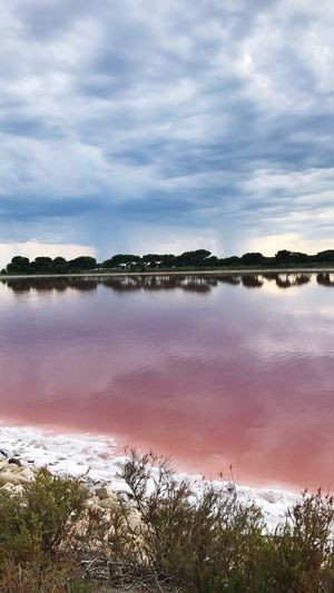 RØSE Pink Sel Cloud - Sky Sky Water Reflection Nature Tranquility Beauty In Nature