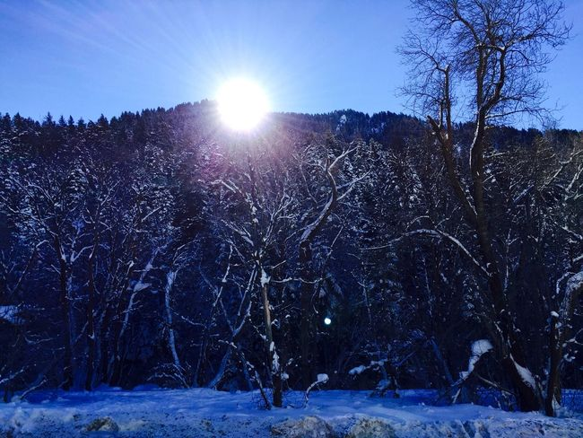 sun hitting mountain Bare Tree Cold Cold Temperature Covering Forest Frozen Landscape Lens Flare Light Nature No People Outdoors Season  Snow Tranquil Scene Tranquility Weather Winter