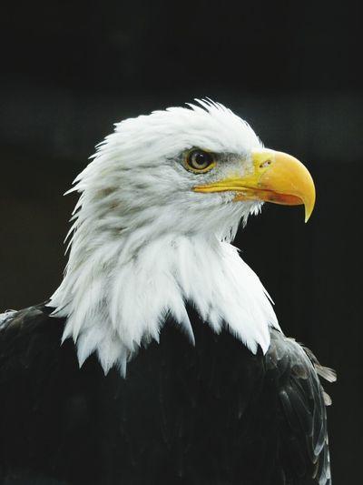 Mon Totem, mon Animal Fetiche . L' Oiseau de mes Reves ( Dream ). EyeEm Best Shots EyeEm Nature Lover Birds The Portraitist - 2015 EyeEm Awards