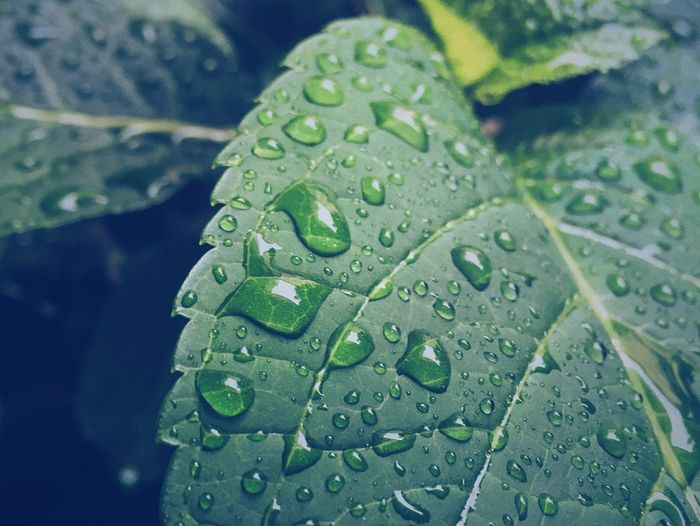 Drop Water Leaf Green Color Wet Freshness Close-up Nature RainDrop Droplet No People Beauty In Nature Fragility Growth Day Plant Outdoors Lily Pad