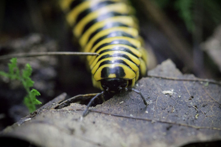 Centipede Macro Photography Macro Nature Outdoors Nature Animals In The Wild Close-up Selective Focus