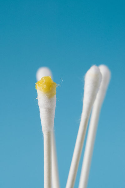 Close up macro shot of isolated white cotton swabs or ear buds with yellow ear wax, medical otologic term is cerumen, on bright blue background Cleaning Cotton Swab Ear Wax Removal Yellow Flower Bright Blue Sky Cerumen Close-up Cotton Stick Ear Buds Ear Wax Macro No People Otolaryngology Studio Shot Yellow