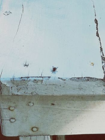 Fly. Animal Themes