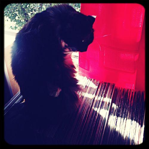 Vinyl Vinyl Cat choices