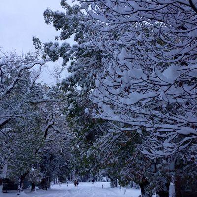 Abkhazian winter)the first of January Snow Abkhazia 2016 First Eyeem Photo