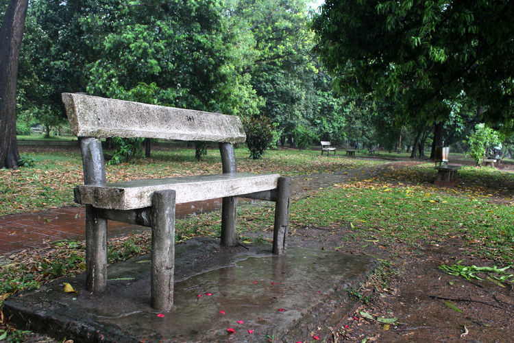 Plant Tree Seat Bench Nature Park Growth Green Color Grass Day Tranquility Park - Man Made Space No People Empty Park Bench Outdoors Absence Chair