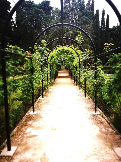 Archway amidst trees