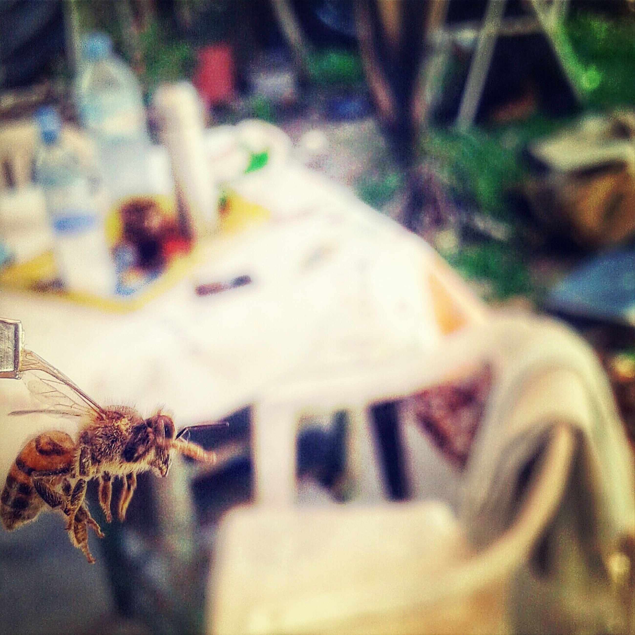 selective focus, close-up, focus on foreground, indoors, animal themes, no people, one animal, insect, day, animals in the wild, art and craft, wildlife, creativity, plant, dry, nature, animal representation, dead animal, high angle view