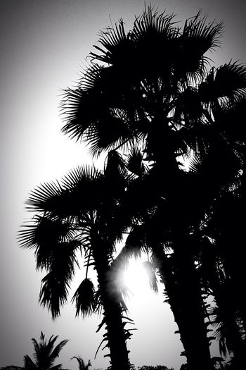 I Love Nature! Everyday Lives Today's Photos Beautiful Nature Island Haynan Black And White Palm Trees Beautiful View Enjoying Life Hello World