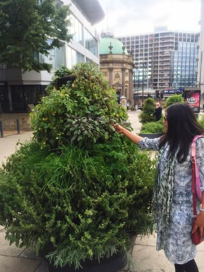 Free Fruit & Vegetable Plant Display