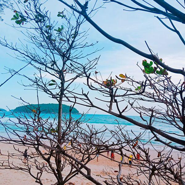 Nai HarnBeach Nai Harn Beach  Thailand🇹🇭 Bird Tree Branch Bare Tree Sky