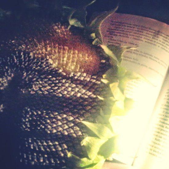 Reading A Book Nice Atmosphere Słonecznik Love♡