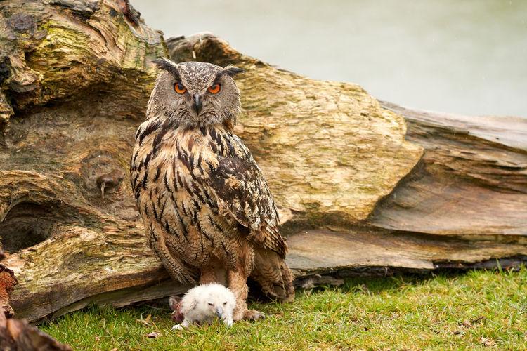 Dead bird on rock