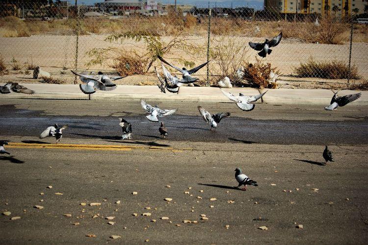 Hitchcock's The Birds Animal Wildlife Bird Birds Breadcrumbs Day Flock Of Birds Flock Of Birds Nature Outdoors Sunlight Urbanwildlife