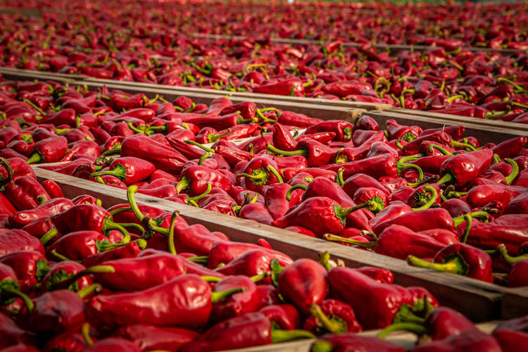 Red chili peppers for sale at market stall