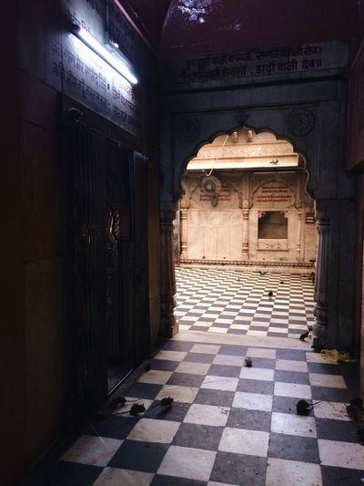 Temple India Carni-mata Rat