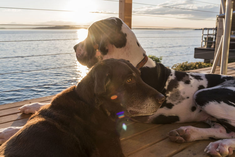 Close-Up Of Dogs Resting In Ship By Sea In Sunny Day
