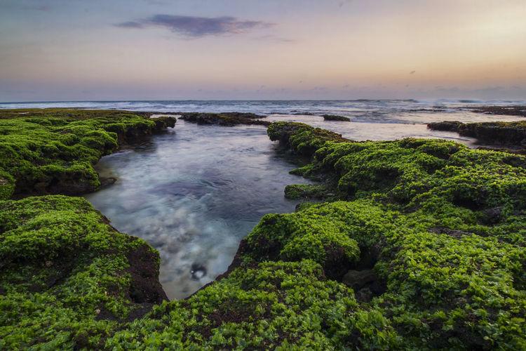 seaweed growth