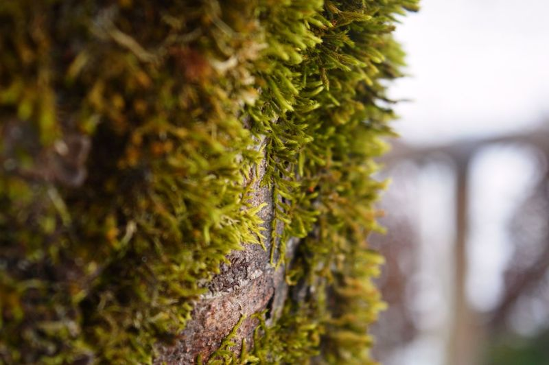Tree Trunk Tree Sky Outdoors No People Nature Moss Lichen Growth Green Color Focus On Foreground Day Close-up Beauty In Nature