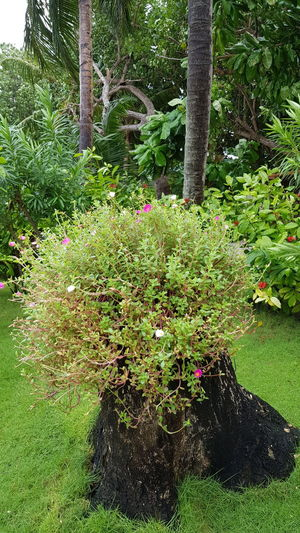 Trees and plants in garden