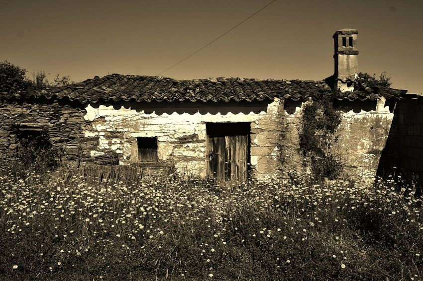 Ruin Ruins Ruins Architecture Sepia Hot Day Beautiful Nature Flowers, Nature And Beauty Portugal Beauty In Nature Light And Shadow Flowers Shadows Old Wooden Door Chimney Tiled Roof  Wild Flowers Tranquility Tranquil Scene Stone Ruins Stone Ruin Portuguese Village Portuguese Houses Your Design Story Portugal Countryside The Architect - 2016 EyeEm Awards