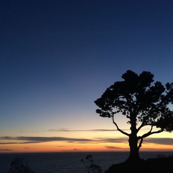 Nature's Diversities Sunset Santa Monica California Tree Golden Hour Ocean Beach Sky