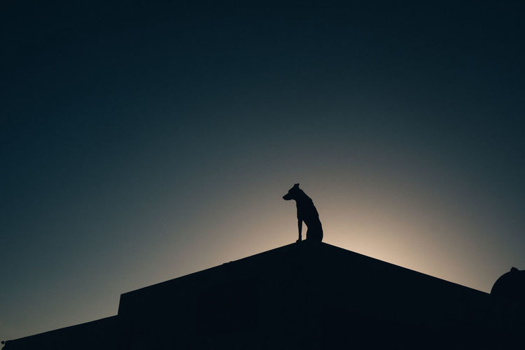 At The Edge Of Built Structure Clear Sky Dog Dogslife Dusk Leisure Activity Lifestyles Low Angle View Nature Silhouette Sky